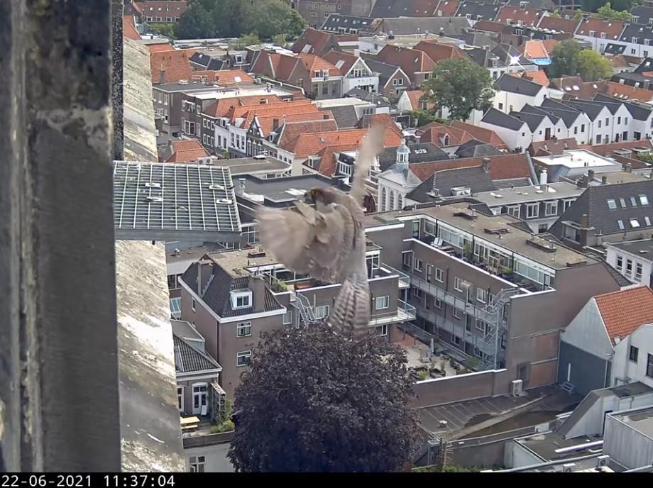 Amersfoort/OLV toren - Pagina 8 Amers142