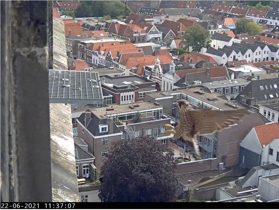 Amersfoort/OLV toren - Pagina 8 Amers143