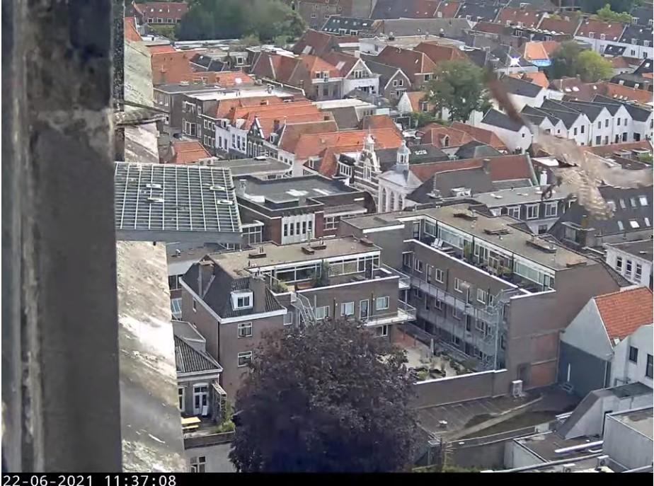 Amersfoort/OLV toren - Pagina 8 Amers144
