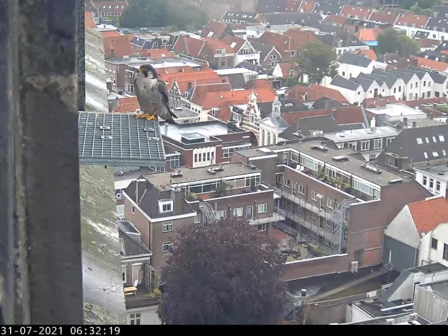 Amersfoort/OLV toren - Pagina 8 Amers149