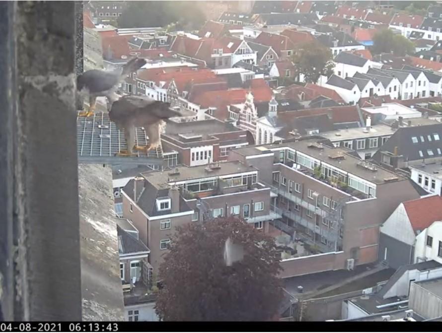 Amersfoort/OLV toren - Pagina 9 Amers151