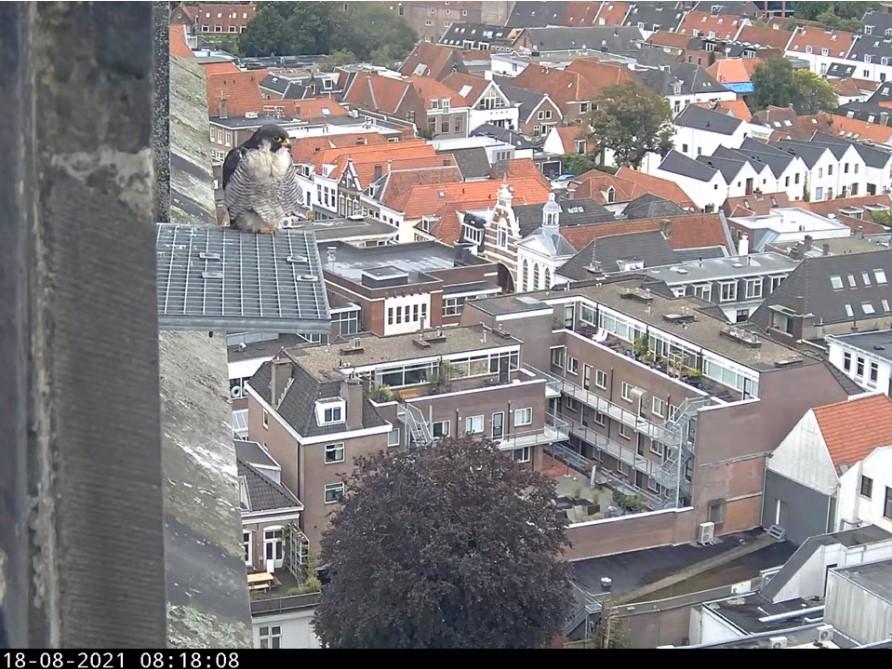 Amersfoort/OLV toren - Pagina 9 Amers152