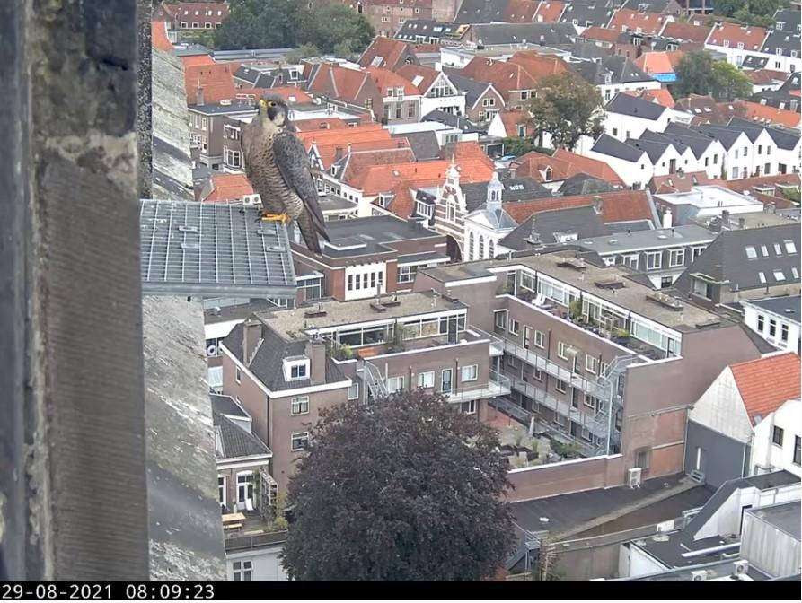 Amersfoort/OLV toren - Pagina 9 Amers155
