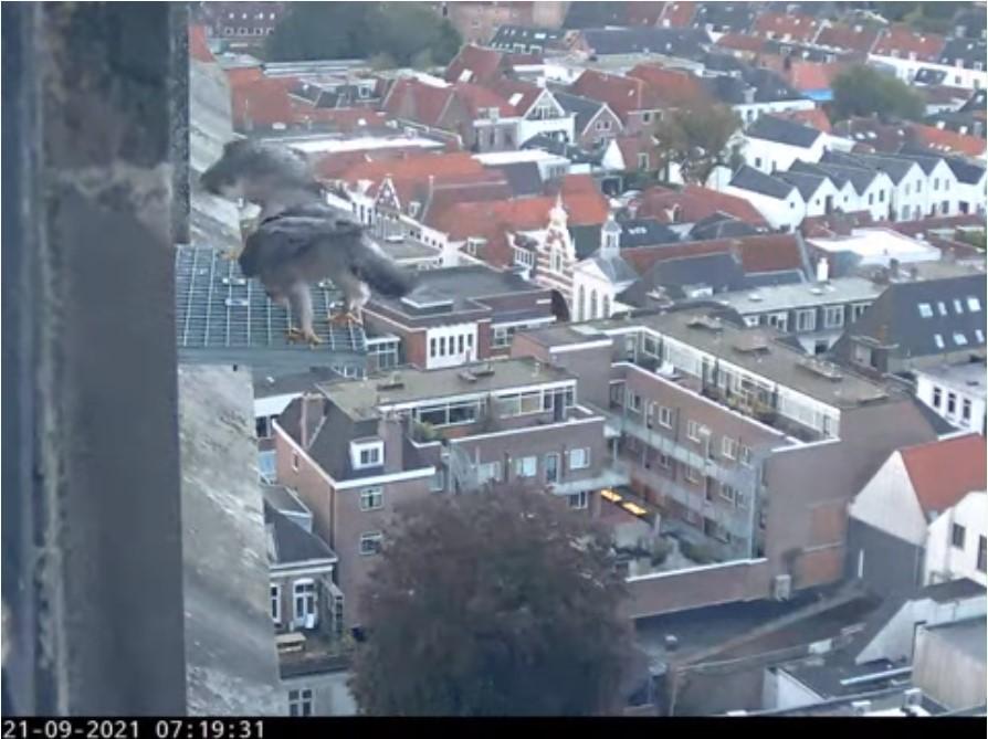 Amersfoort/OLV toren - Pagina 9 Amers156