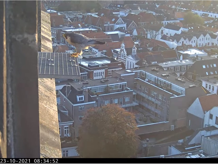 Amersfoort/OLV toren - Pagina 10 Amers164