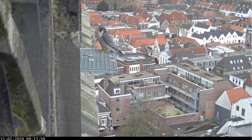 Amersfoort/OLV toren. Joris en V (1PF) - Pagina 4 Amersf20