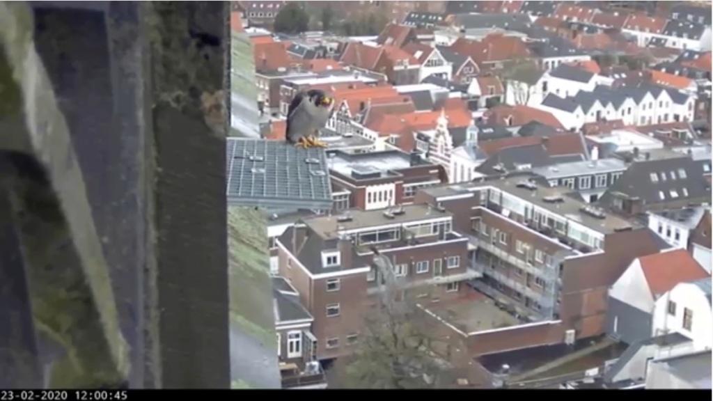 Amersfoort/OLV toren. Joris en V (1PF) - Pagina 4 Amersf23