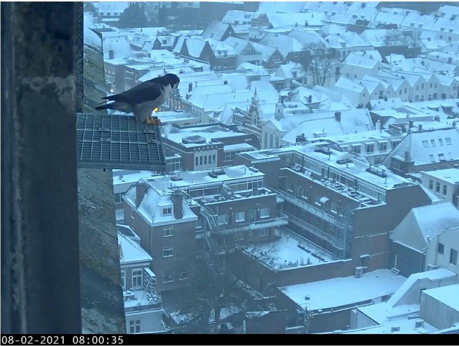 Amersfoort/OLV toren - Pagina 3 Amersf92