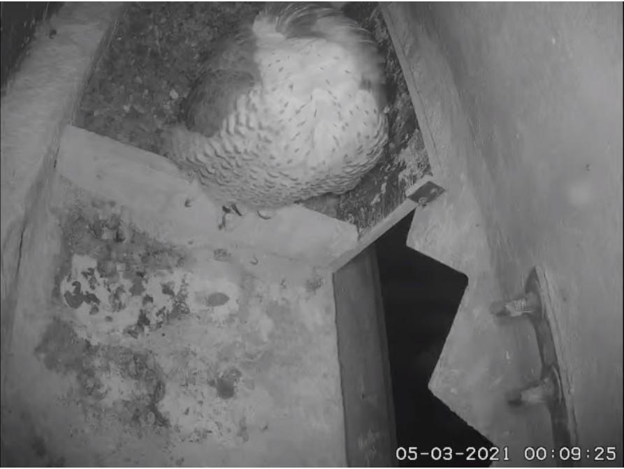 Les faucons d'Armentières Arment13