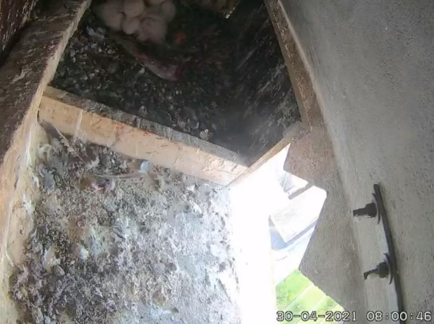 Les faucons d'Armentières Arment18