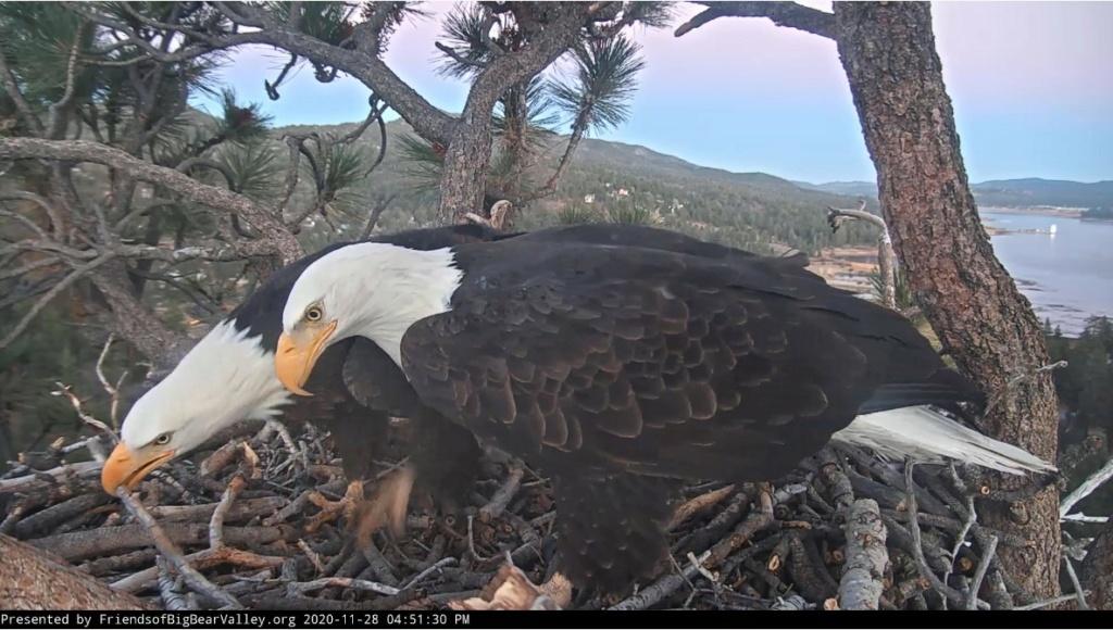 Diverse Eagle cams. - Pagina 22 Big_be10