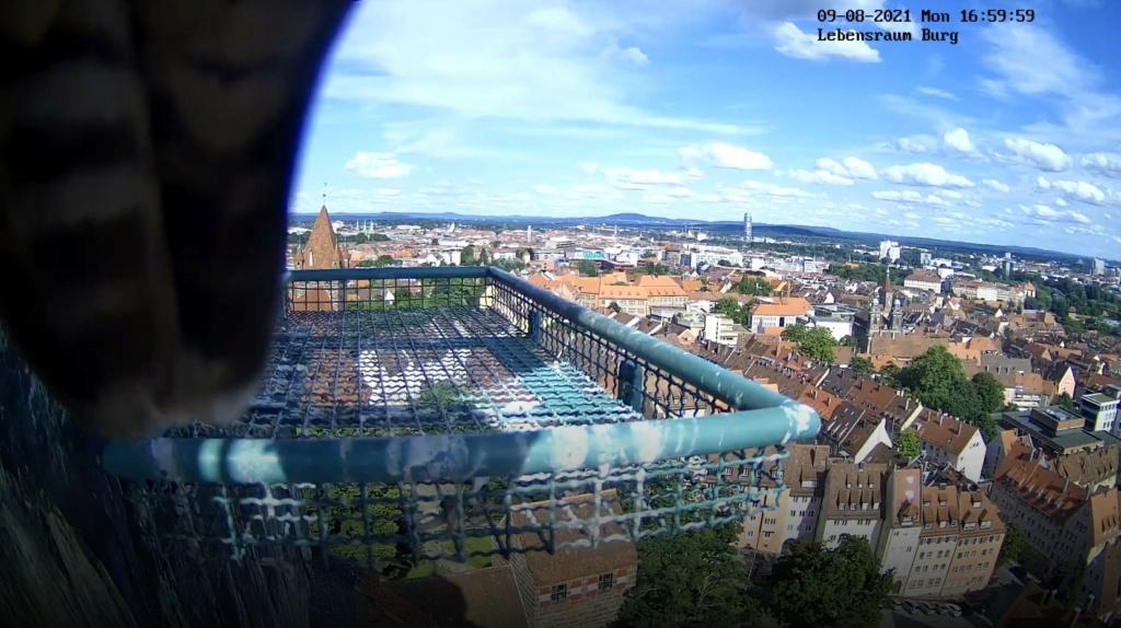 Nürnberg. Lebensraum Burg/ Sinwellturm - Pagina 5 Burg_010