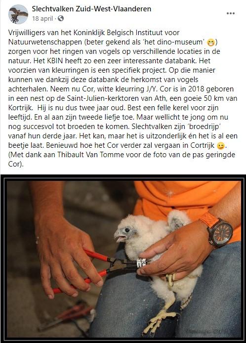 Kortrijk/Sint-Maartenskerktoren - Pagina 3 Cor10