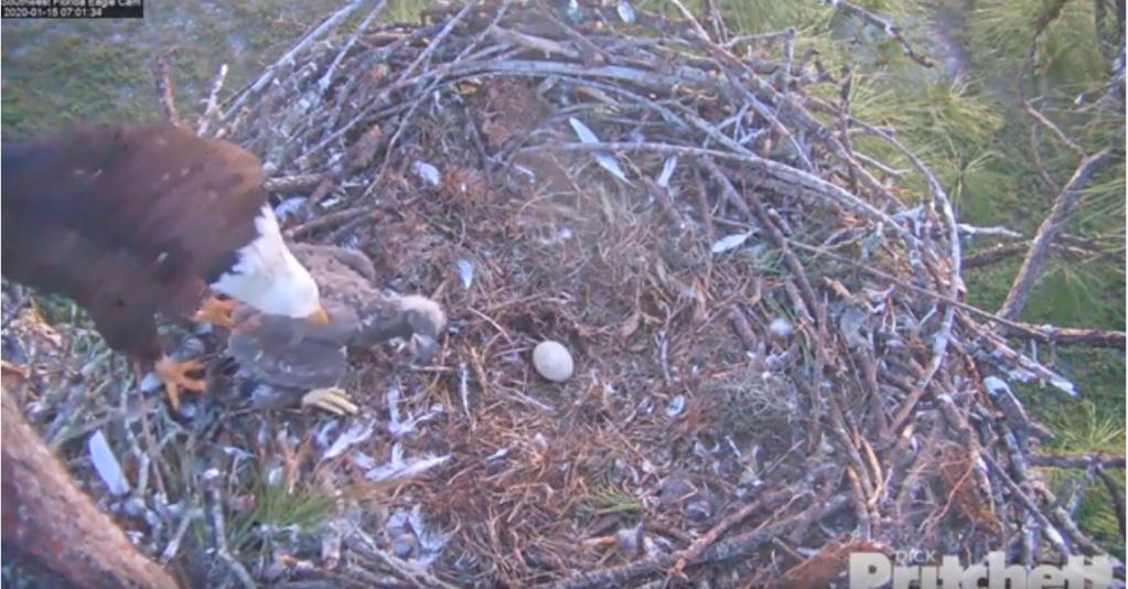 Southwest Florida Eagle Cam - Pagina 2 Florid10
