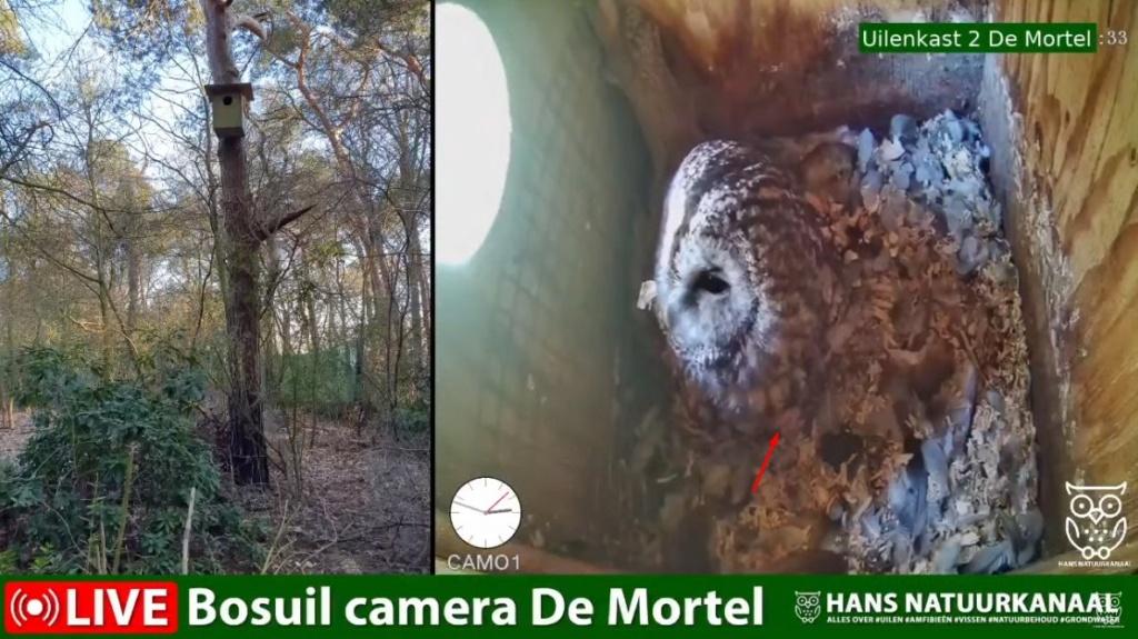 Bosuil de Mortel 2021 - Pagina 5 Het_ku10