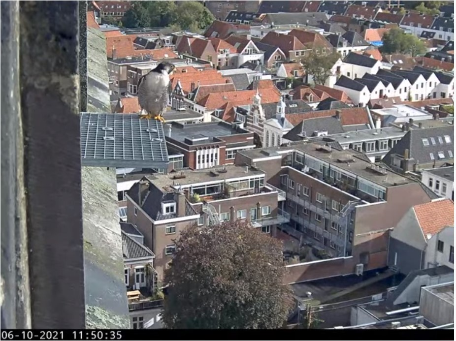 Amersfoort/OLV toren - Pagina 10 Joris_10