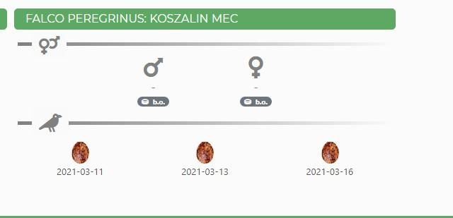 Koszalin mec Koszal10