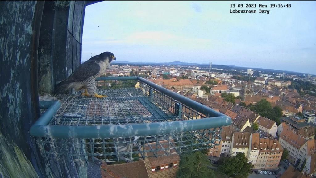 Nürnberg. Lebensraum Burg/ Sinwellturm - Pagina 5 L_raum11