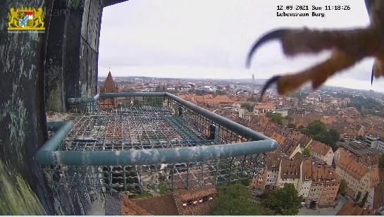 Nürnberg. Lebensraum Burg/ Sinwellturm - Pagina 5 Lraum_10