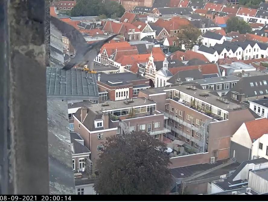 Amersfoort/OLV toren - Pagina 9 M_vert13