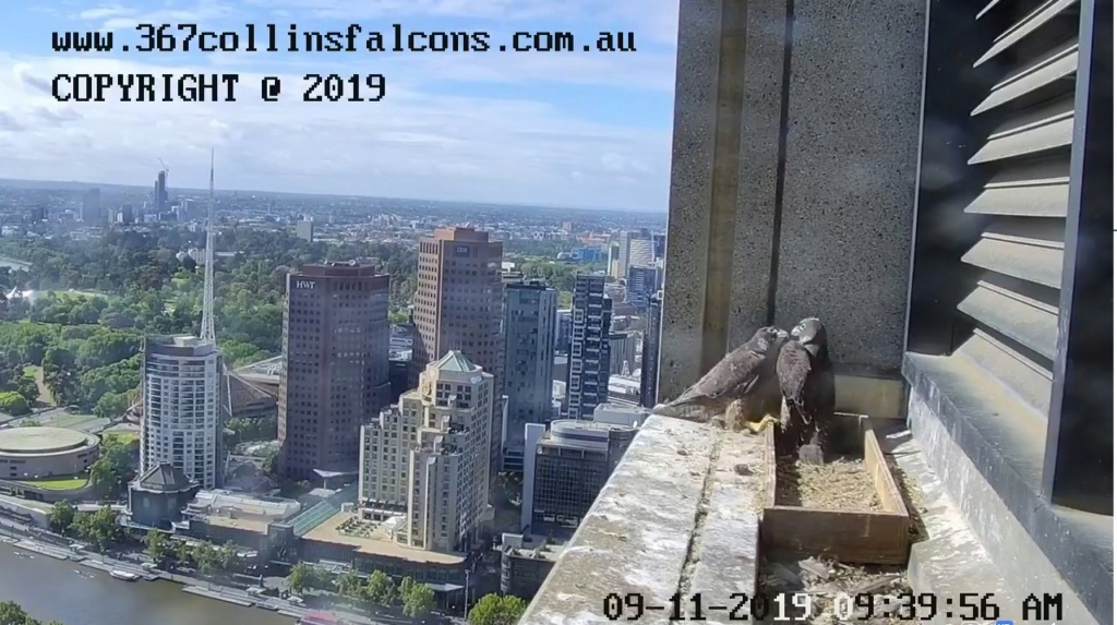 Melbourne. 367 Collins Street  - Pagina 5 Melbou10