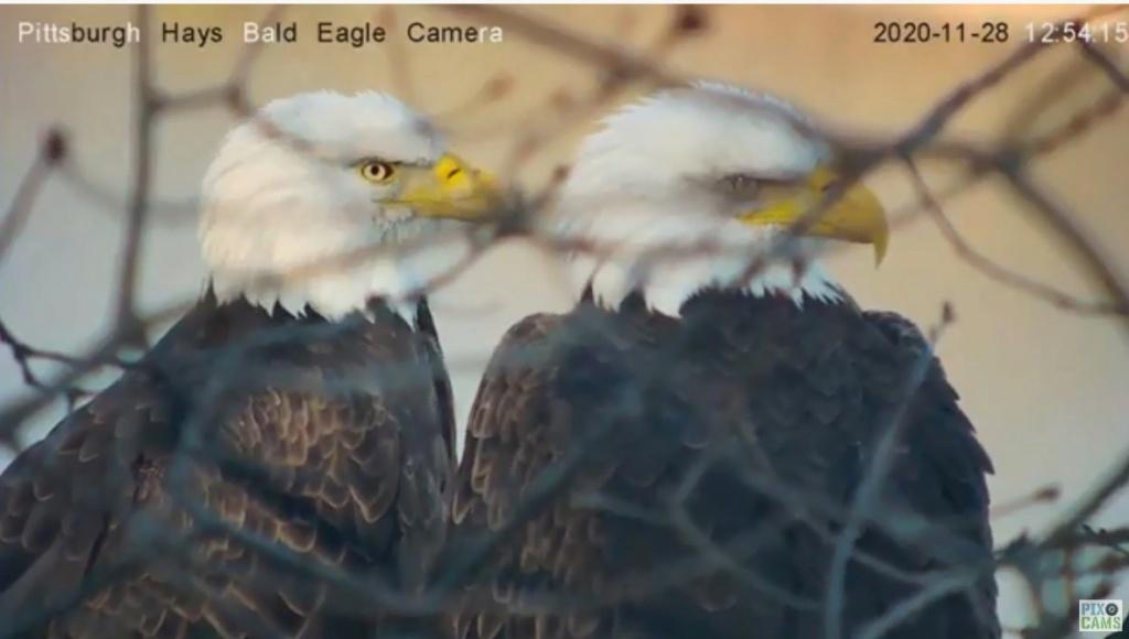 Diverse Eagle cams. - Pagina 23 Pittsb10