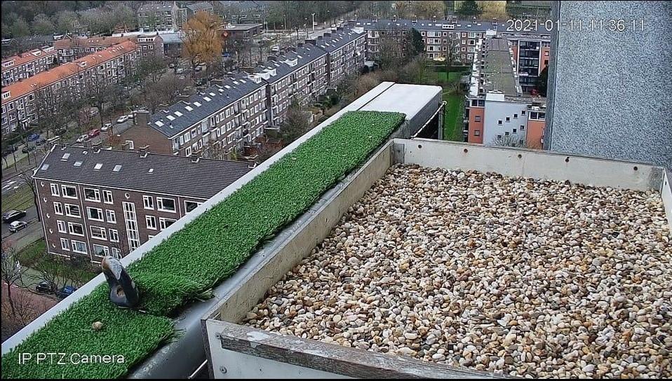 Rijswijk/Klokkentoren Rijswi10