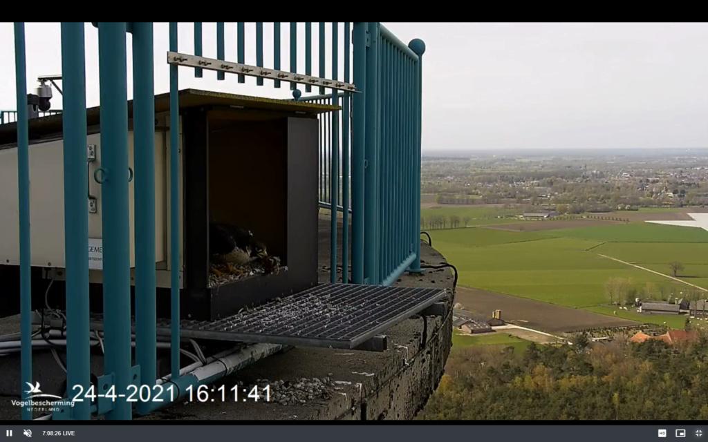 campics vanaf pip/ hatch 1e kuiken © VWGGemert/VBN - Pagina 6 Scherm12