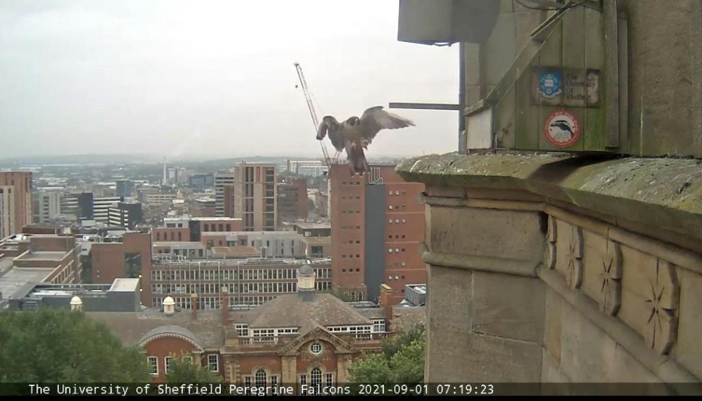 Sheffield/Yorkshire. - Pagina 4 Sheffi33