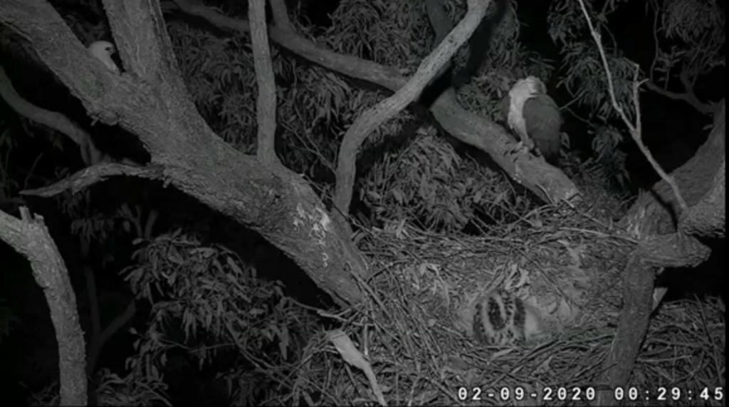 Sidney Sea-Eagle cam. - Pagina 11 Sydney10