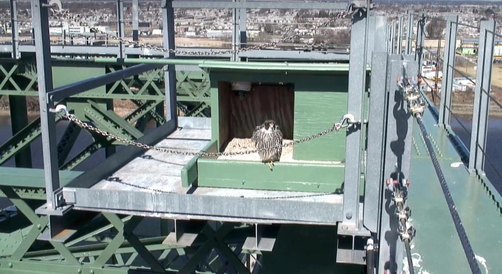 New Jersey: Jersey City, New Jersey/Union County, Palmyra Cove, Burlington Bristol Bridge. T_brid11