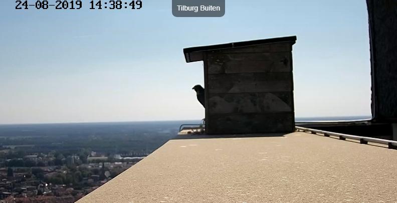 Tilburg Til ~ Borg. - Pagina 18 Tilbur12