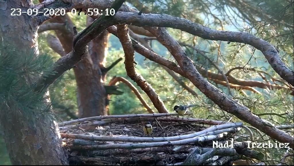 Webcam Trzebiez. Male Forest (7X -2013) & Female Gaja (9 BO - 2011) - Pagina 3 Trzebi13