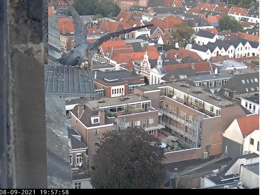 Amersfoort/OLV toren - Pagina 9 V_vert14