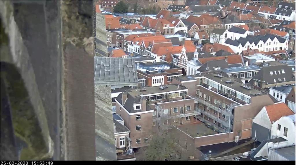 Amersfoort/OLV toren. Joris en V (1PF) - Pagina 4 Valk_104