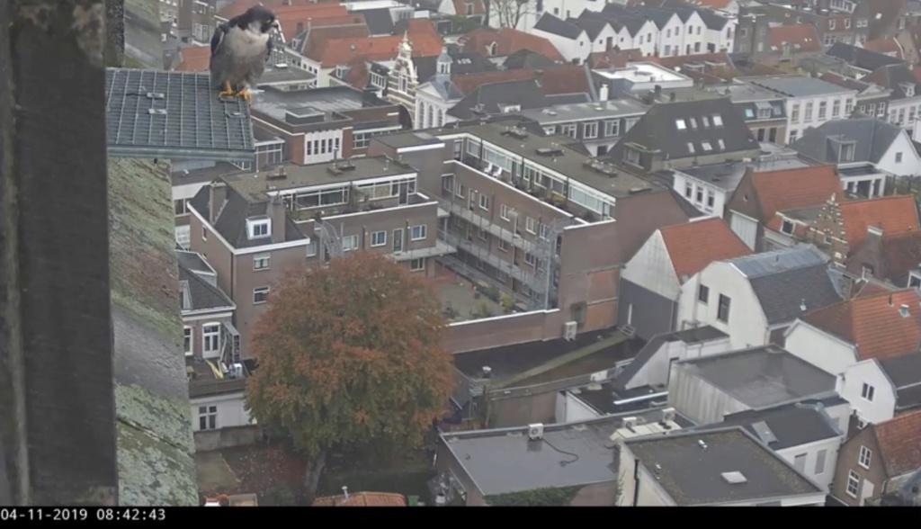 Amersfoort/OLV toren. Joris en V (1PF) Valk_a20