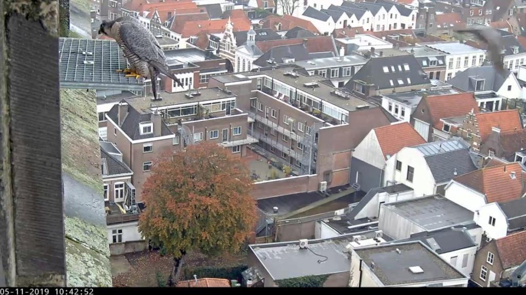 Amersfoort/OLV toren. Joris en V (1PF) Valk_a23