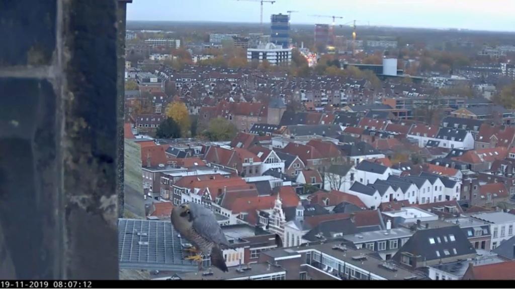 Amersfoort/OLV toren. Joris en V (1PF) Valk_a31