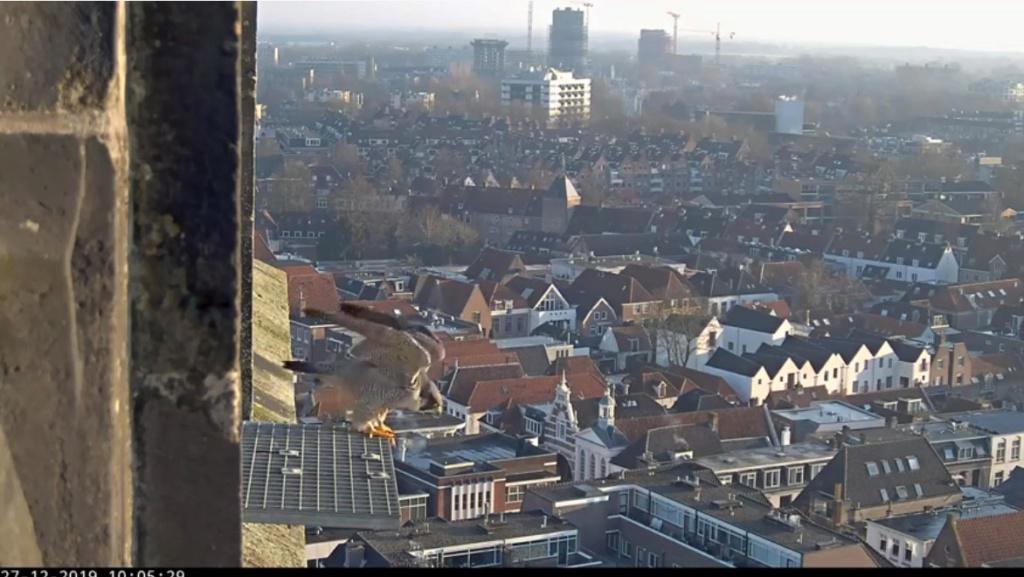 Amersfoort/OLV toren. Joris en V (1PF) - Pagina 2 Valk_a45