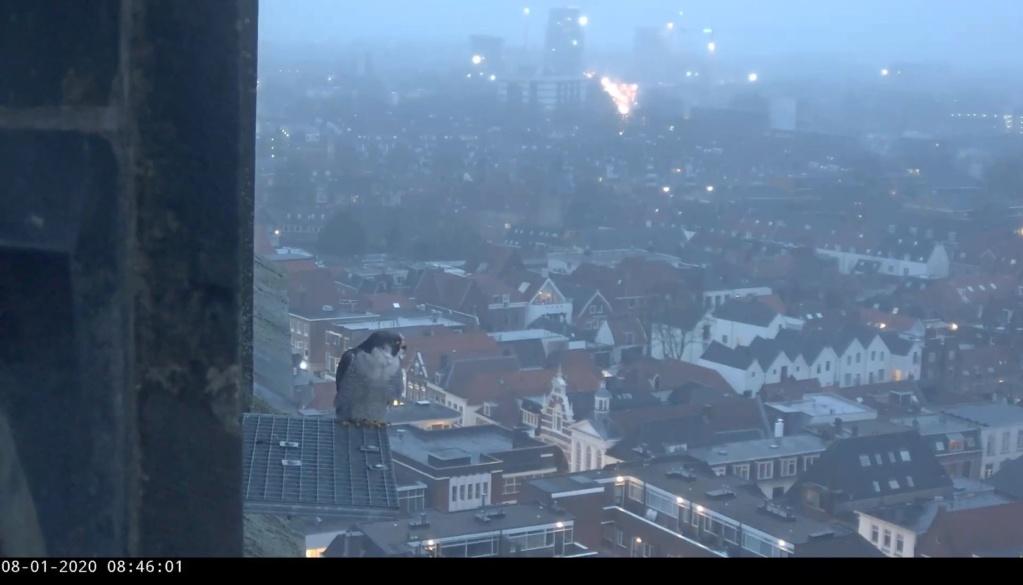 Amersfoort/OLV toren. Joris en V (1PF) - Pagina 2 Valk_a52