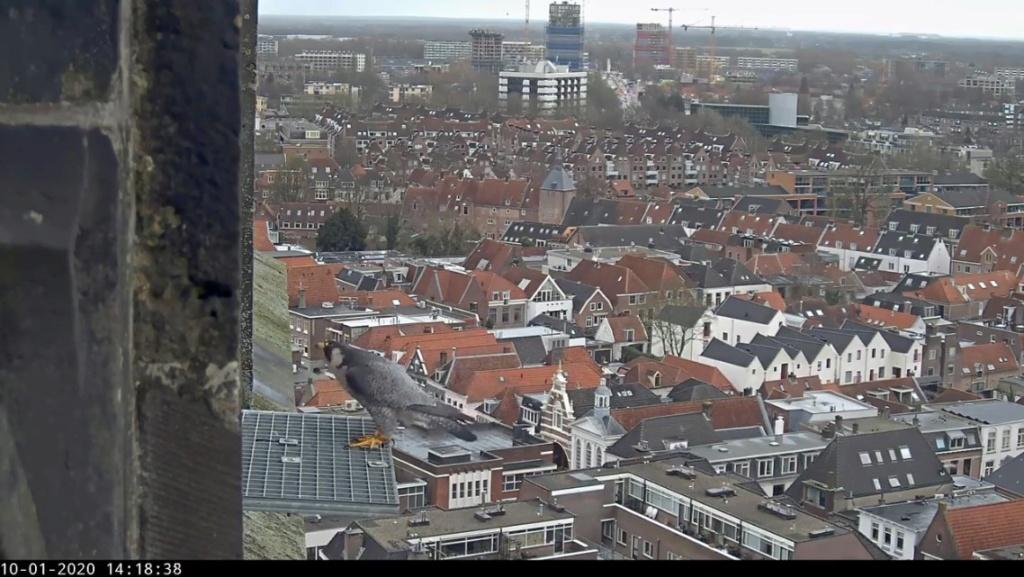 Amersfoort/OLV toren. Joris en V (1PF) - Pagina 2 Valk_a55