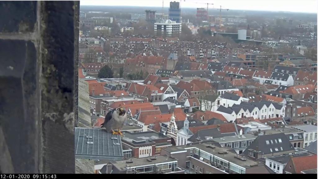 Amersfoort/OLV toren. Joris en V (1PF) - Pagina 2 Valk_a57