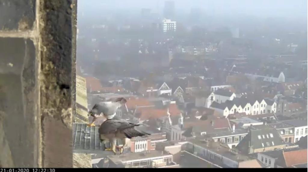 Amersfoort/OLV toren. Joris en V (1PF) - Pagina 2 Valk_a63