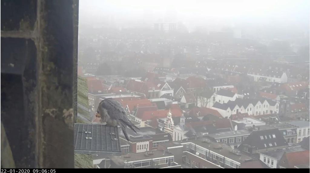 Amersfoort/OLV toren. Joris en V (1PF) - Pagina 3 Valk_a65