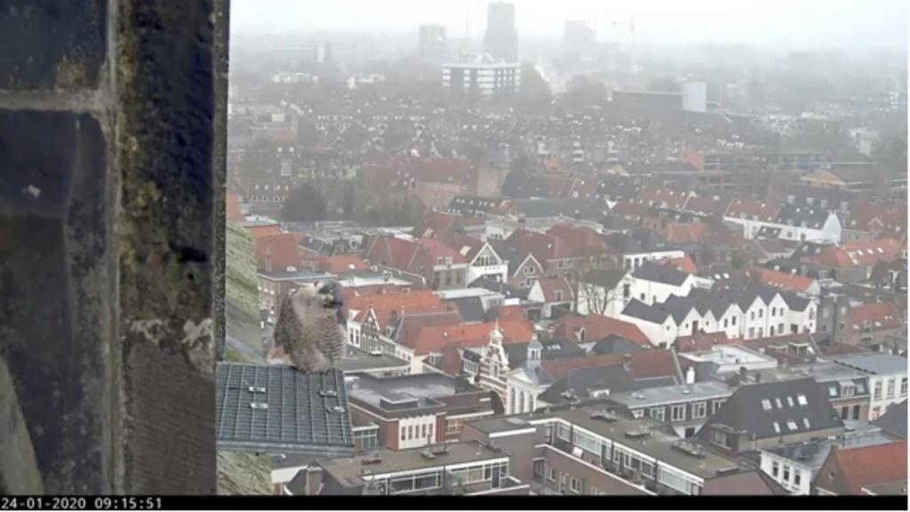 Amersfoort/OLV toren. Joris en V (1PF) - Pagina 3 Valk_a70