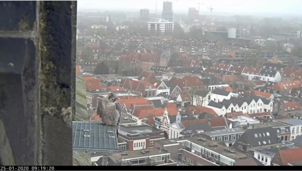Amersfoort/OLV toren. Joris en V (1PF) - Pagina 3 Valk_a71