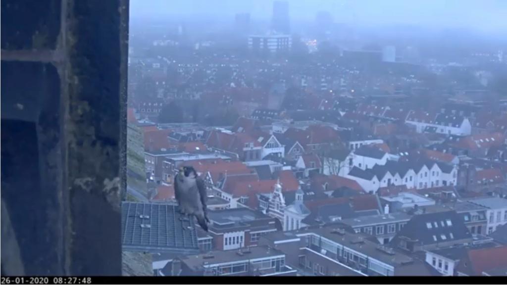 Amersfoort/OLV toren. Joris en V (1PF) - Pagina 3 Valk_a72