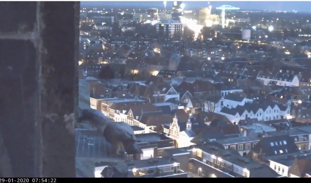 Amersfoort/OLV toren. Joris en V (1PF) - Pagina 3 Valk_a73