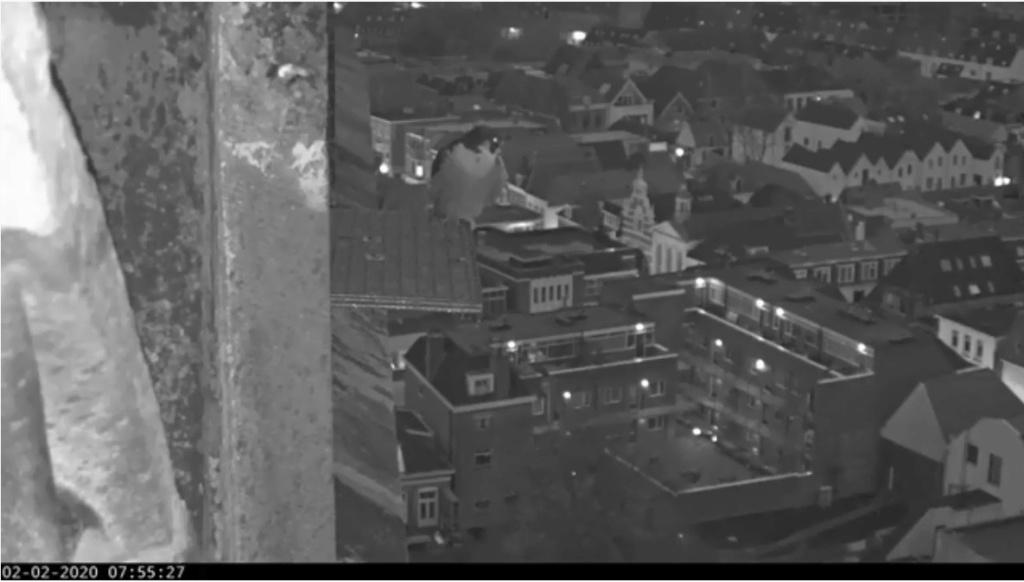 Amersfoort/OLV toren. Joris en V (1PF) - Pagina 3 Valk_a75