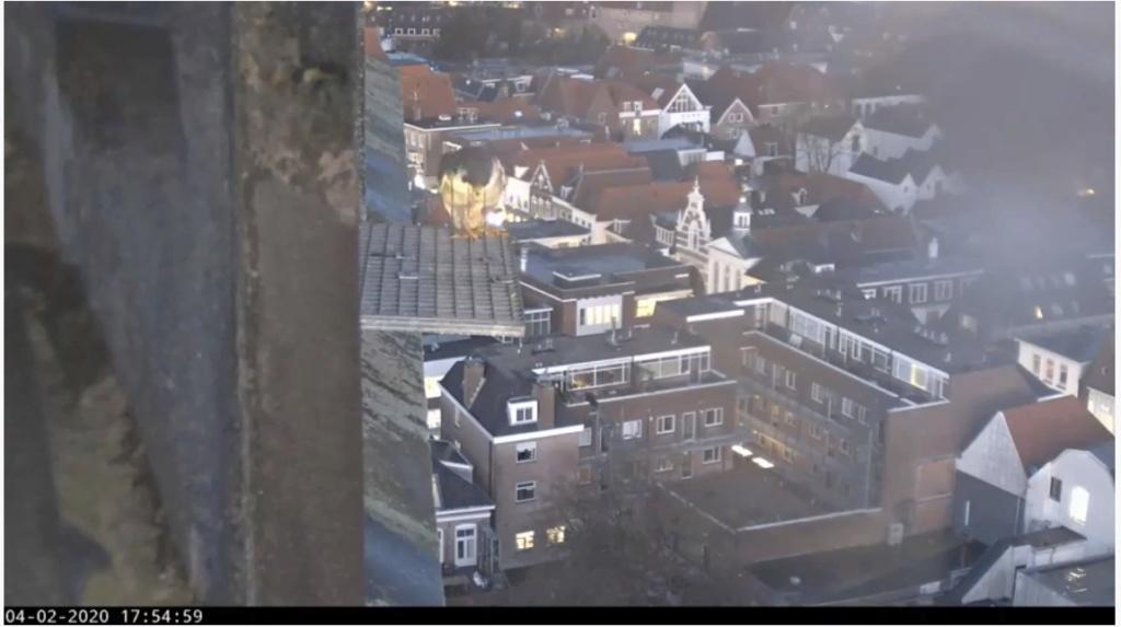 Amersfoort/OLV toren. Joris en V (1PF) - Pagina 3 Valk_a77
